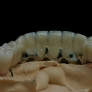 ceramo-implant4.jpg